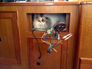 Rosie and wiring in CD player box