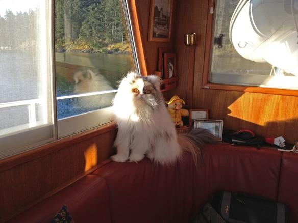 Rosie at Reid Harbor