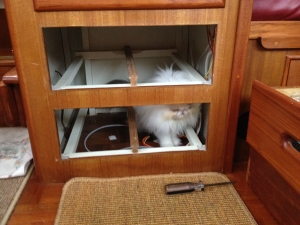 Mickey explores the open space where the drawers have been removed.