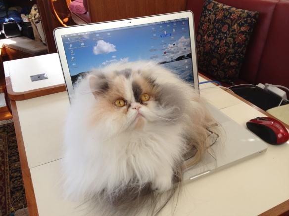 Rosie on laptop