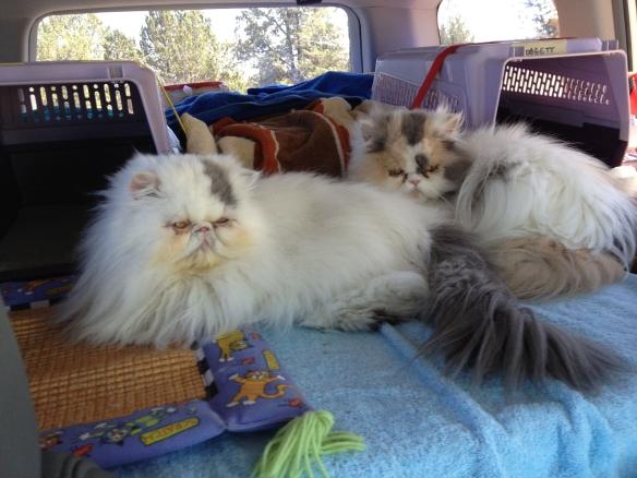 kitties at rest stop
