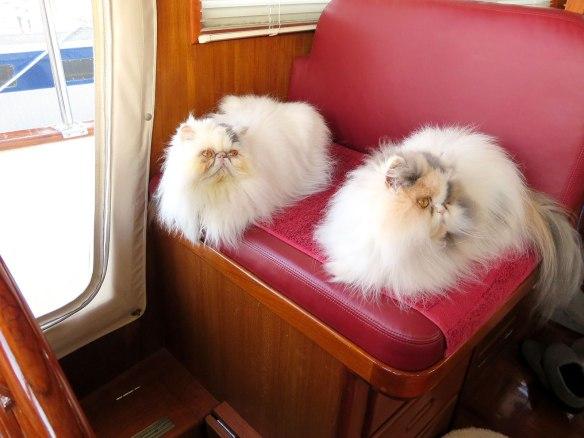 kitties on helm seat