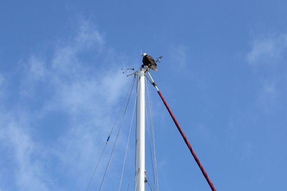 eagle on mast 01