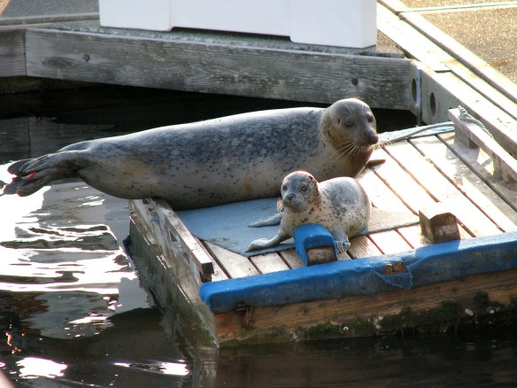 seal and pup after birth