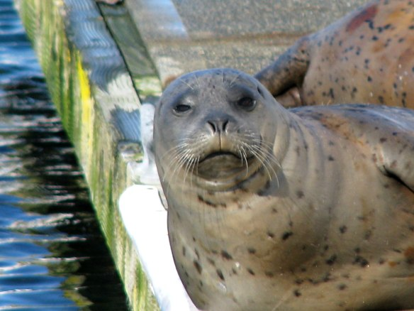 cute seal face