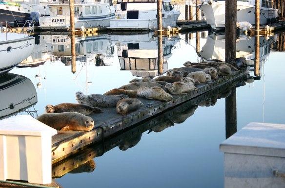 seals on finger pier