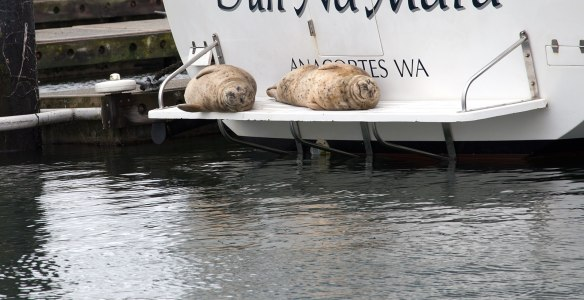 seals on boat swim step