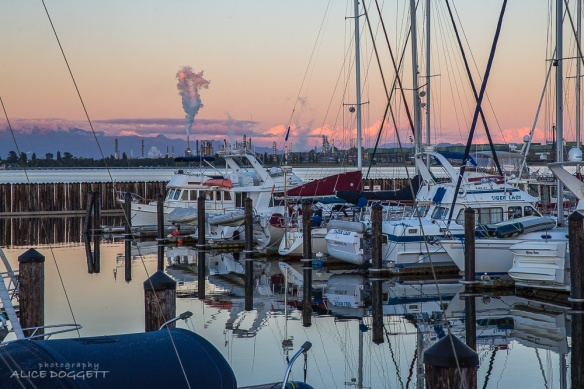 anacortes marina evening