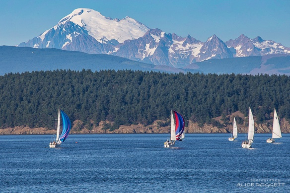 Fidalgo Bay Sailing