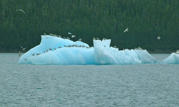 iceberg in tracy arm, alaska